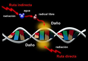 efecto-radical-libre